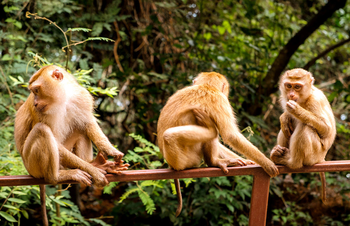 Things to do in Phuket-Thailand-Monkey Hill